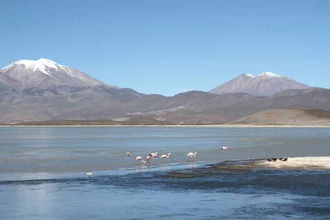 High altitude lake with a small population of flamingoes, Bolivia