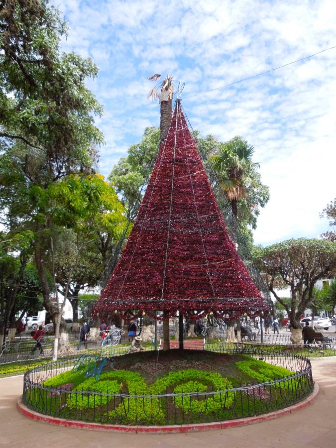 Xmas tree, Plaza 25 de Mayo, Sucre, Bolivia