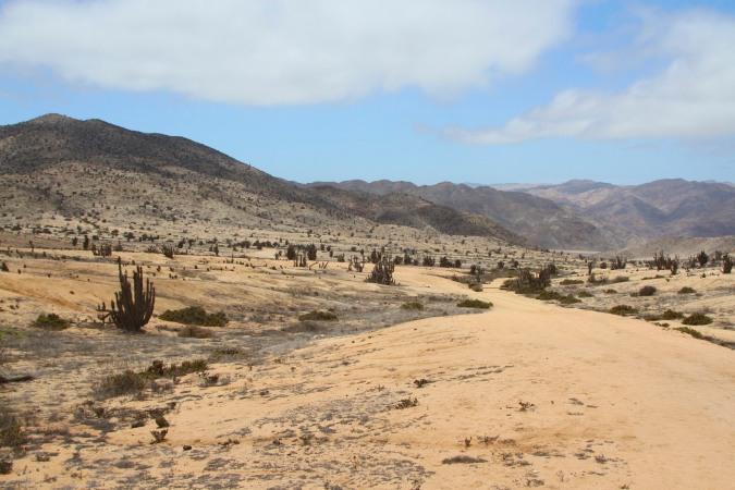 Parque Nacional Pan de Azucar, Chile