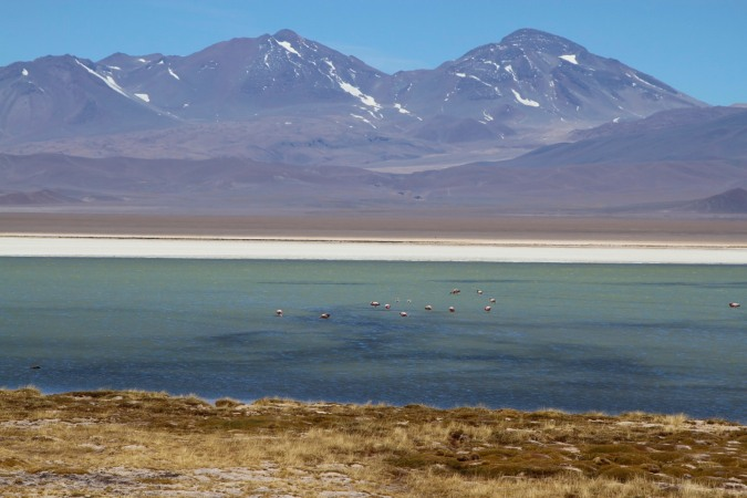Flamingos at Laguna Santa Rosa, Parque Nacional Nevado de Tres Cruces, Chile