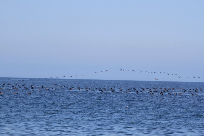 Birds take flight, Pacific Ocean, northern Chile