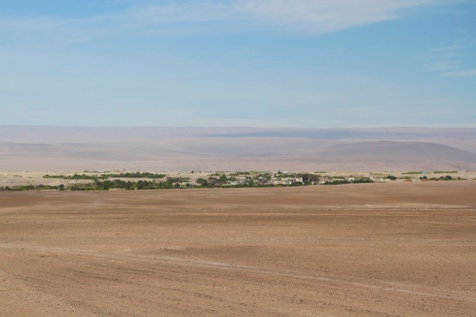 A green paradise in the desert, Pica, Chile
