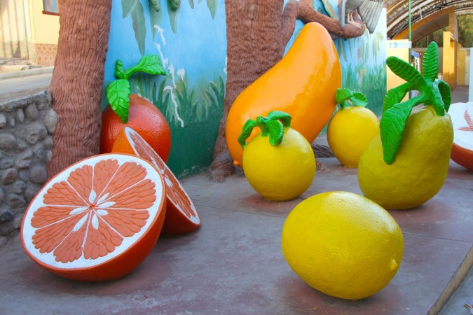 The (giant) fruits of Pica, Chile