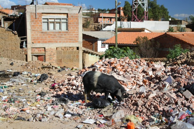 Pig and trash, outskirts of Sucre, Bolivia
