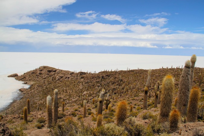 Cactus covered Isla Incahausi, Salar de Uyuni, Bolivia