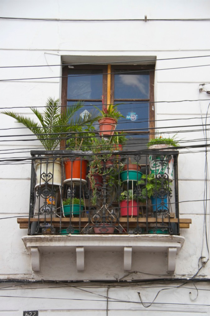 Window with plants, Sucre, Bolivia