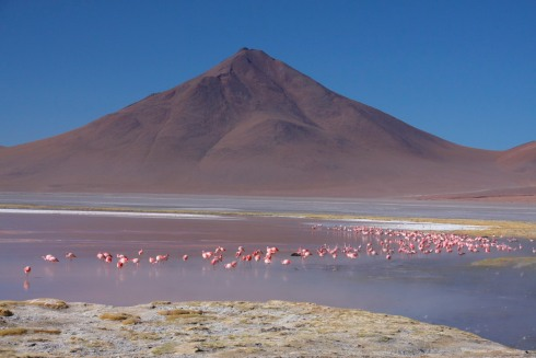 Flamingos in the Bolivian South West, Bolivia