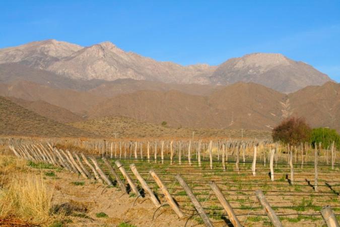 Vineyard, Bodega El Molino de Cachi, Argentina