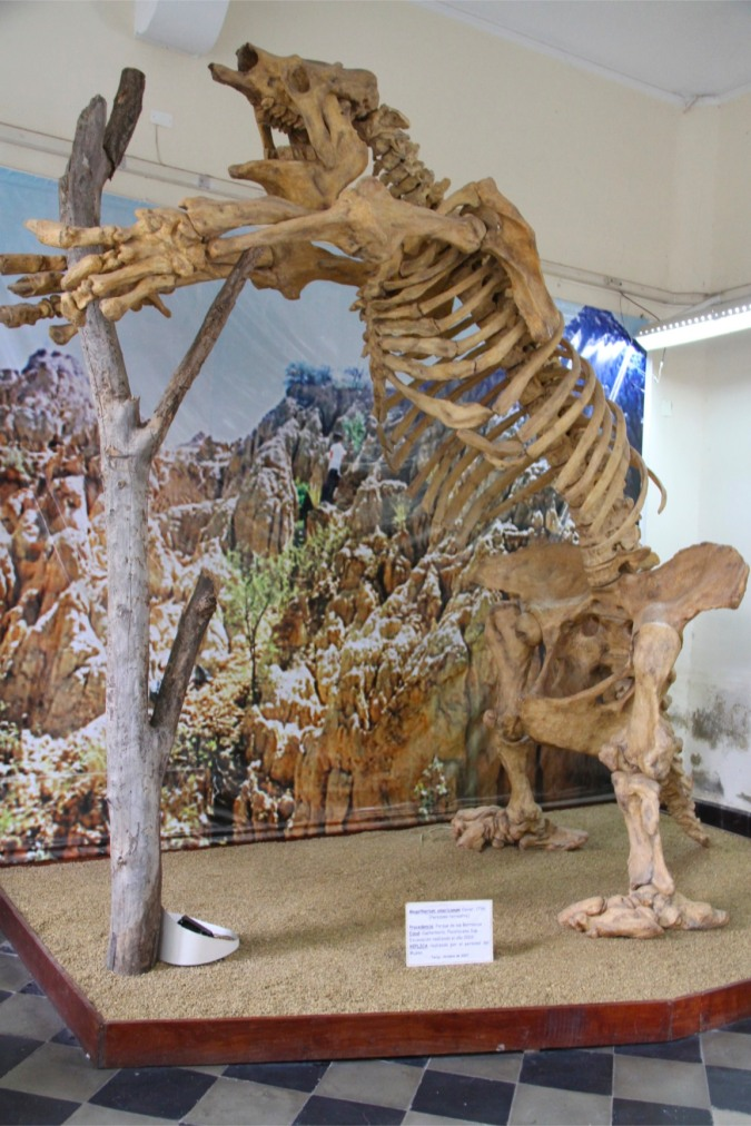 Giant sloth, Tarija's Paleontology Museum, Bolivia