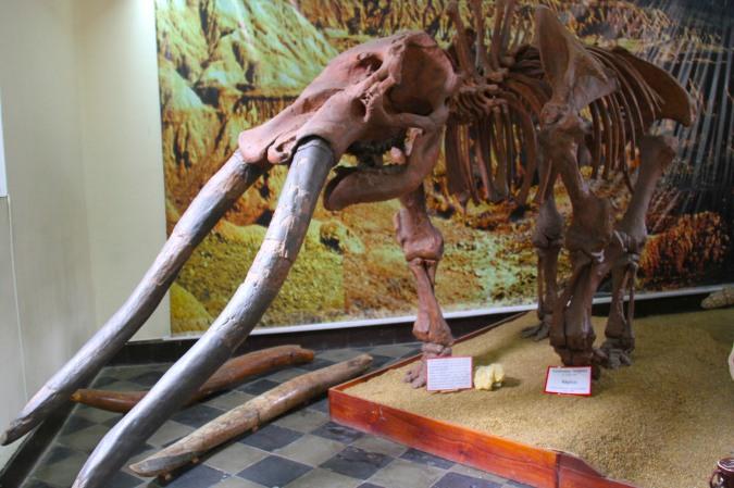 A full elephant skeleton, Tarija's Paleontology Museum, Bolivia
