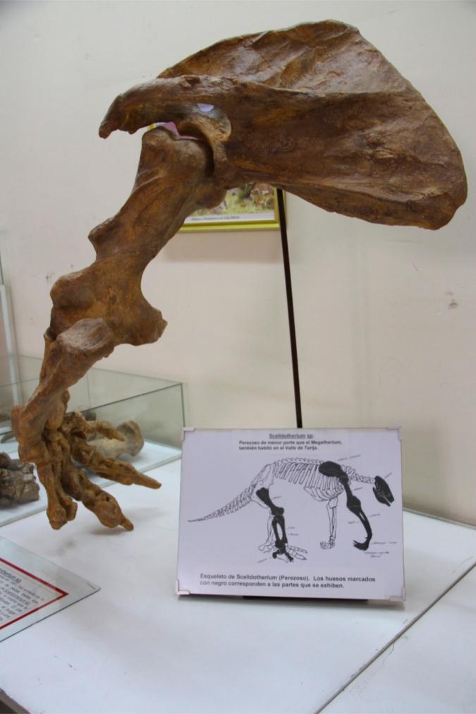 Tarija's Paleontology Museum, Bolivia