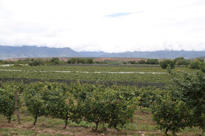 Grape country, Campos de Solana, Tarija, Bolivia