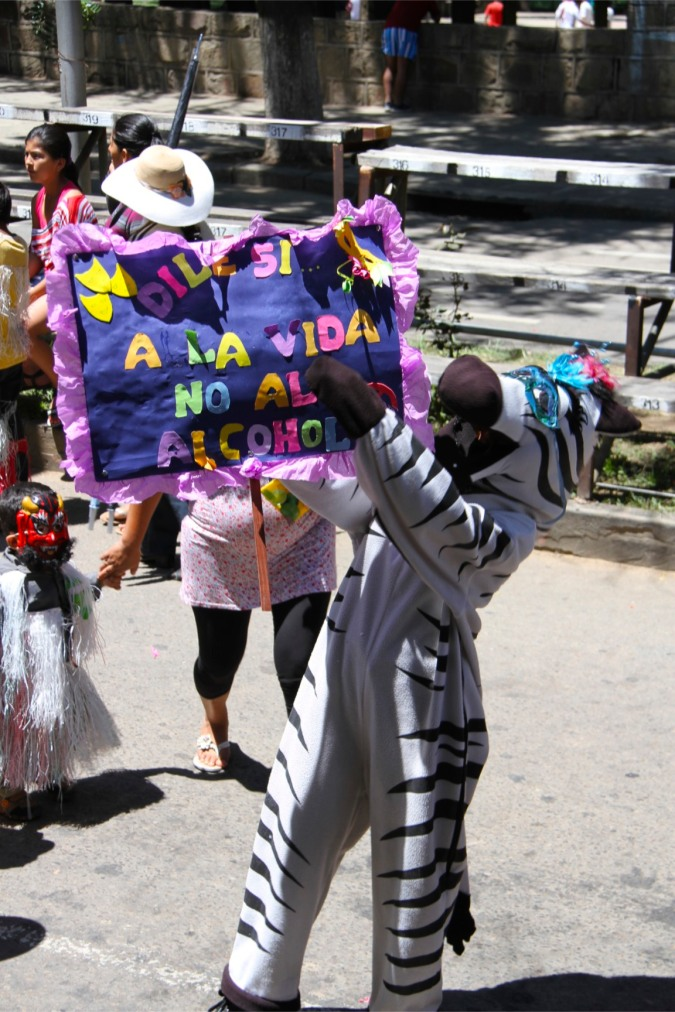 An alcohol-aware zebra, Carneval, Tarija, Bolivia