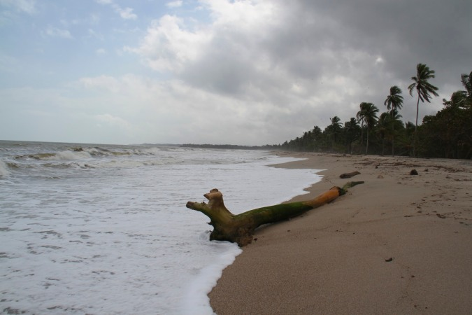 Palm-fringed beach at Palomino, Caribbean, Colombia