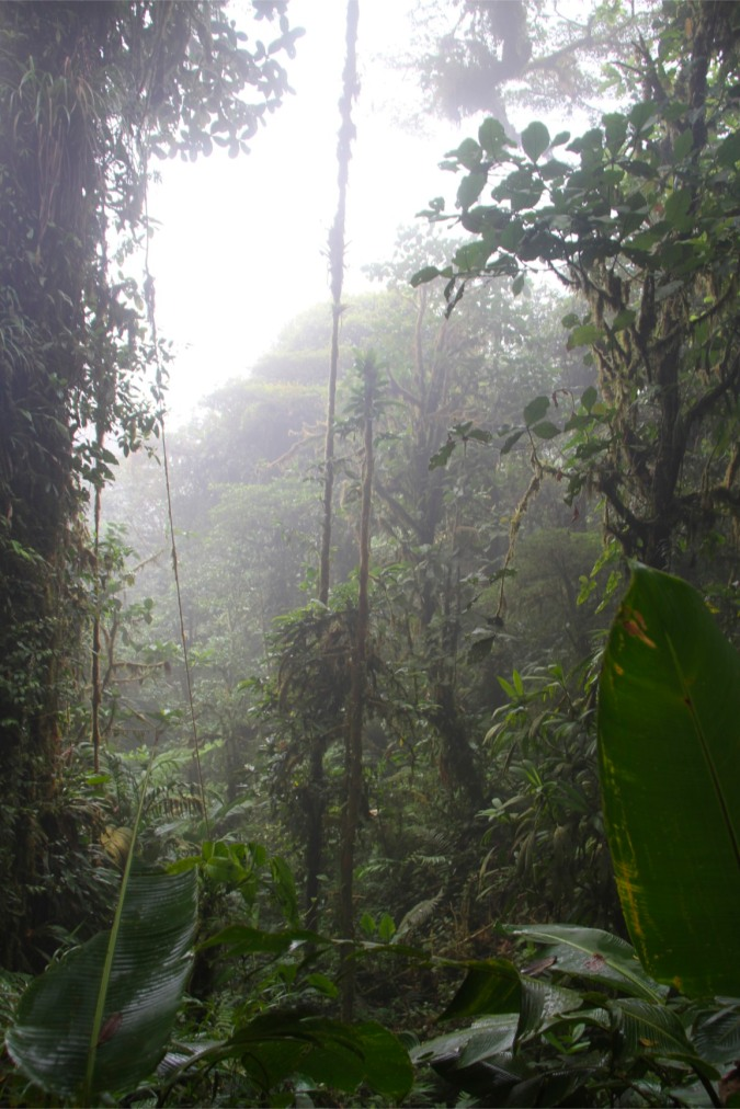 Reserva de Monteverde, Costa Rica