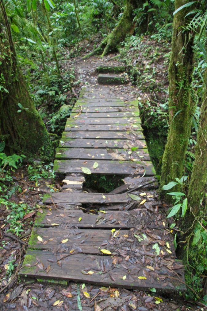 The trail, Reserva Santa Elena, Monteverde, Costa Rica