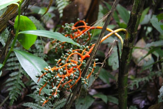 Reserva Santa Elena, Monteverde, Costa Rica