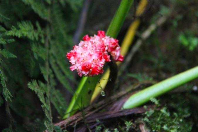 Flower, Reserva Santa Elena, Monteverde, Costa Rica