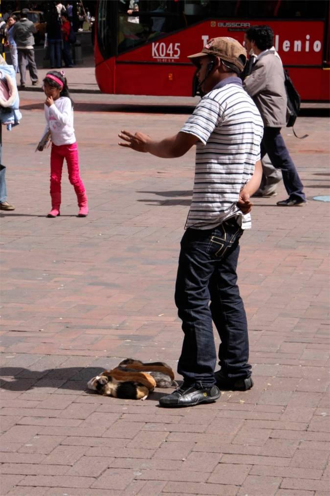 Guinea pig gambling, Bogota, Colombia