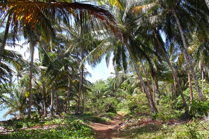 Dirt Tracks through the interior, Little Corn Island, Corn Islands, Nicaragua