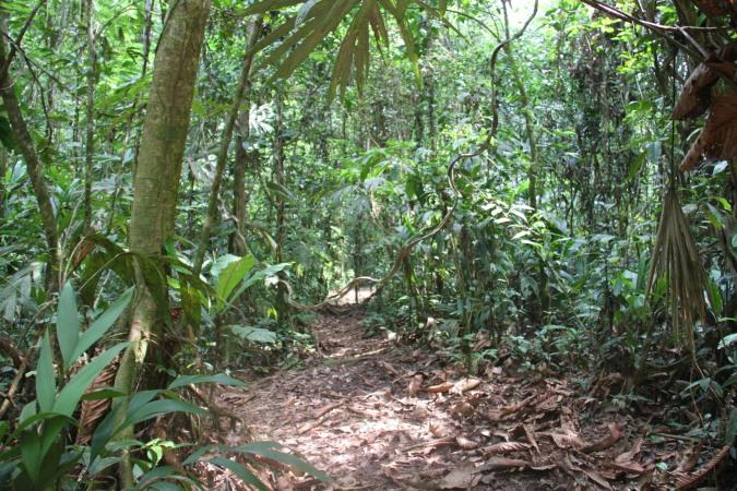 Reserva Biologica Indio-Maiz, Nicaragua