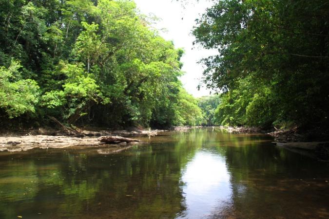 Swimming river, Reserva Biologica Indio-Maiz, Nicaragua