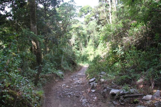 Trail on Vulcan Beru, Boquete, Panama