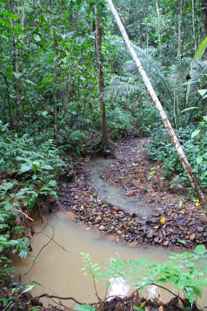 Rainforest, Madidi National Park, Bolivia