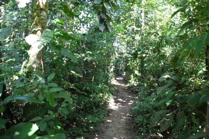 Path to Madidi Jungle Lodge, Madidi National Park, Bolivia