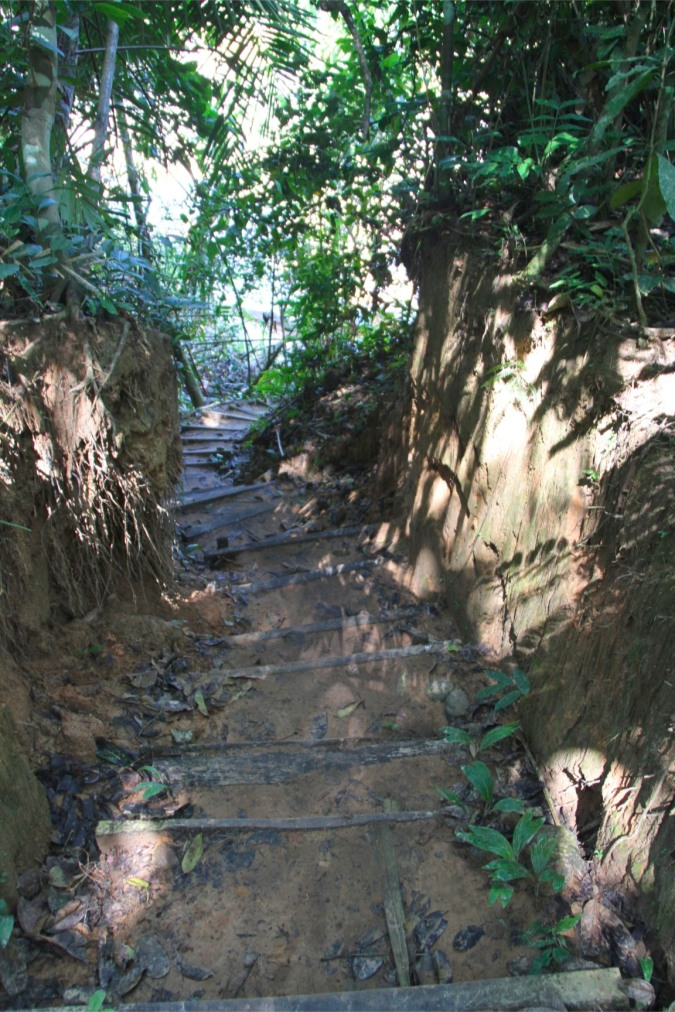 Steps into the jungle at the Madidi National Park, Bolivia