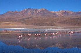 Bolivian South West