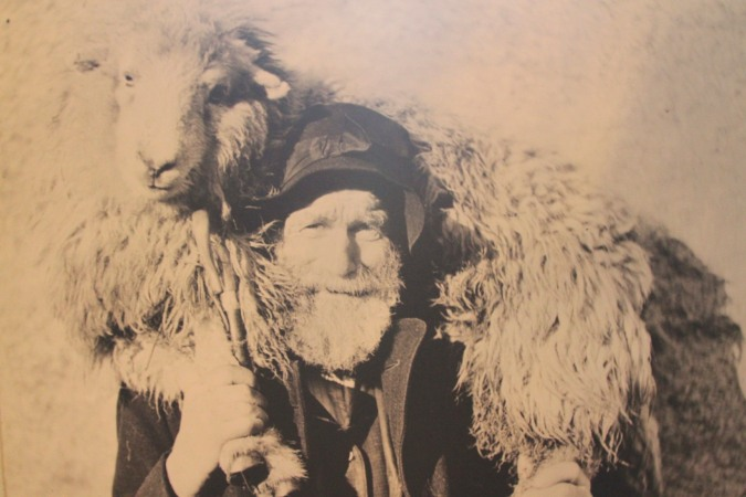Photograph of a sheep farmer and sheep, Abbott Hall Museum, Kendal, Cumbria, England