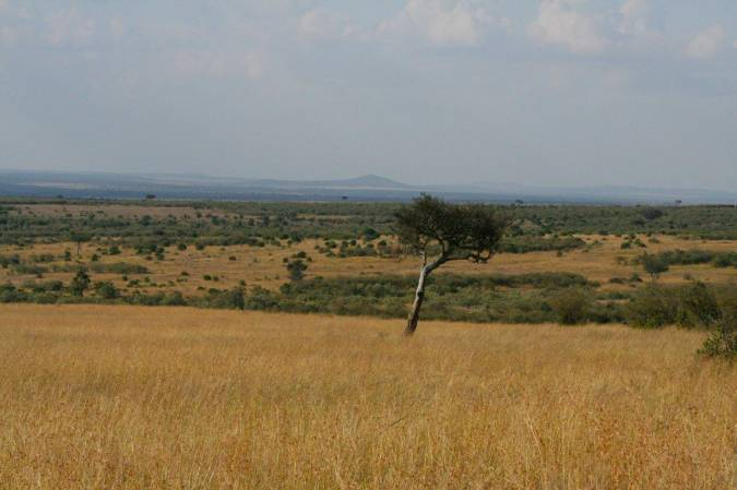 Arcacia tree and view over the Maasai Mara, Kenya, Africa