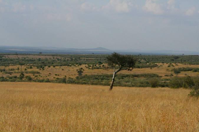 Arcacia tree and view over the Maasai Mara, Kenya, Africa