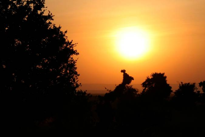 Sunset, Maasai Mara, Kenya, Africa