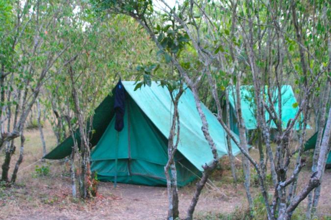 Army-surplus tent, Maasai Mara, Kenya, Africa