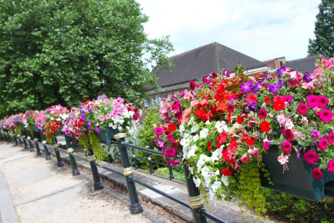 Flowers, Malvern, Worcestershire, England