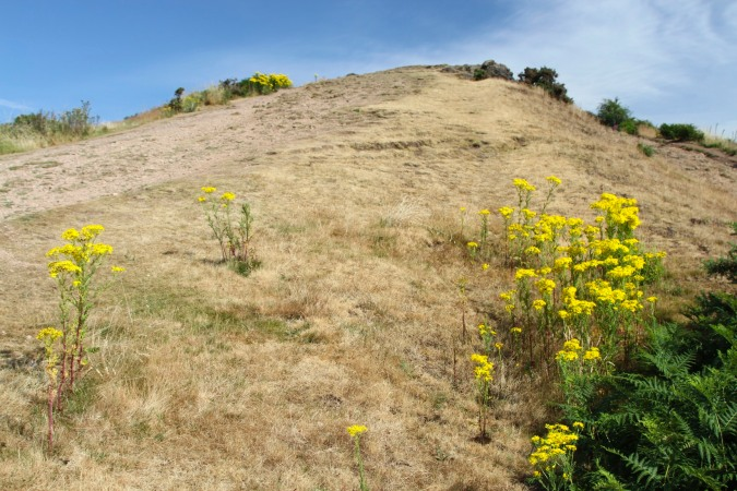 Flowers on the Malvern Hills, Worcestershire