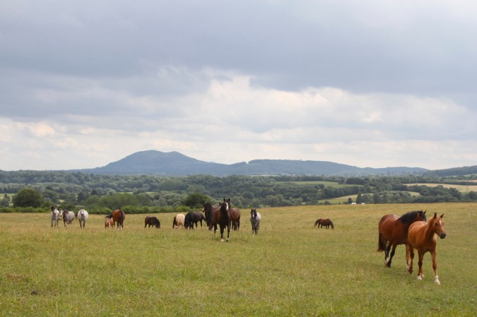 Looking towards the Malvern Hills on the Worcestershire Way, Worcester, England