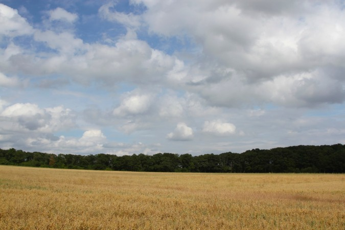Crops, Three Choirs Way, Worcestershire, England