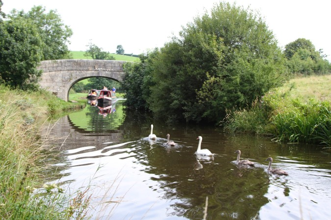 Swans and canal boat, Lancaster Canal, Lancashire, England