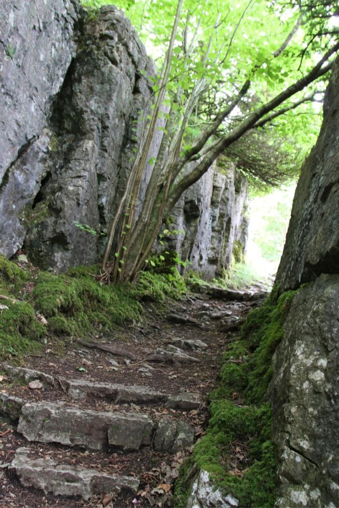 Limestone, Underlaid Wood, Cumbria, England