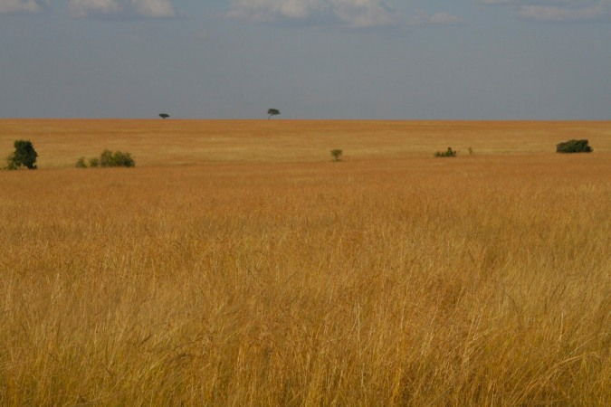 Landscape of the Maasai Mara National Reserve, Kenya, Africa