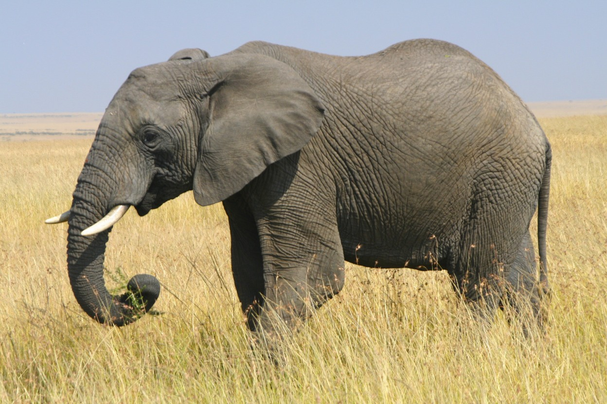 the elephants For the past five years, i've been part of a small group called the elephants the elephants gives me a system for planning, reviewing and improving my life few people know about the elephants but it's undoubtedly one of the best things that's happened to me i want to share the elephants' system so that.
