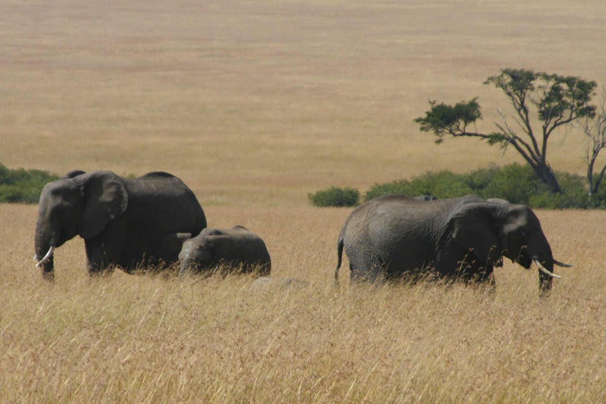 Hippopotamus Notesfromcamelidcountry