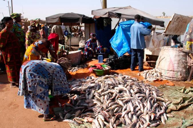 Fish for sale, Mopti, Mali, Africa