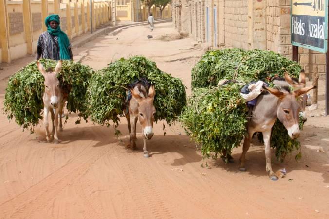 Street scene, Timbuktu, Mali, Africa