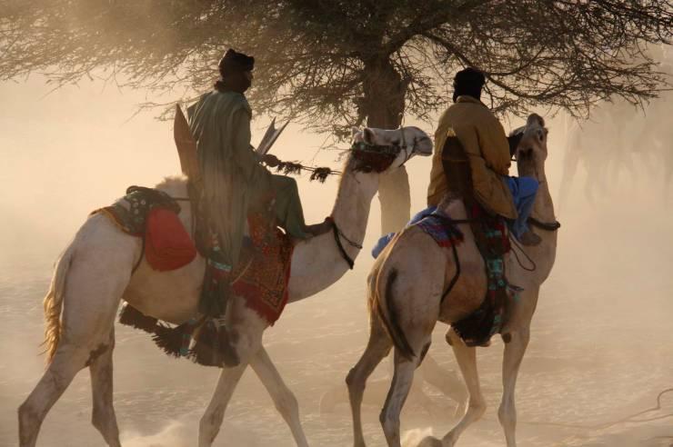 Tuareg arrive on camels at Essakane, home of the Festival au Désert, Mali, Africa