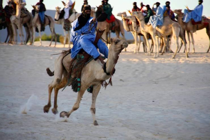 Tuareg racing camels, Festival au Désert, Mali, Africa