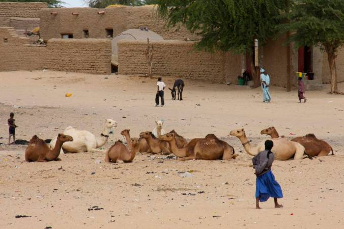 Camels in the street, Timbuktu, Mali, Africa